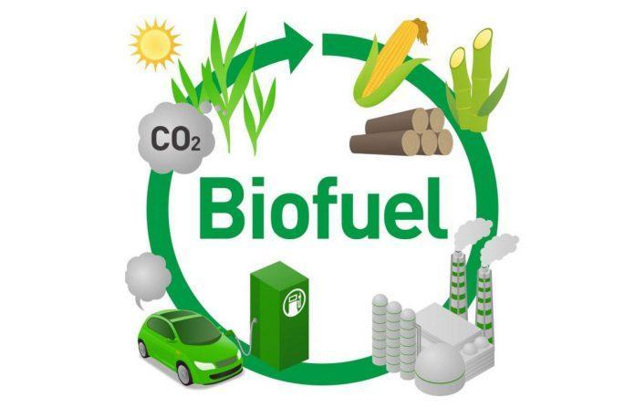 Manufacturer Of Bio Diesel With Established Client Base Mpumalang