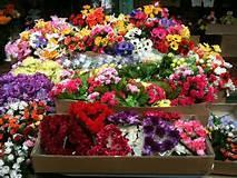 Retailer and Wholesaler of fresh flowers in the Garden Route region.