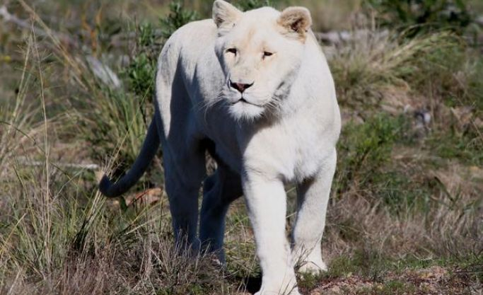 Lion Park including property near Cape Town for sale as going Concern